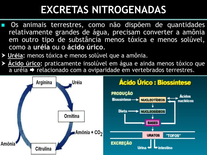 EXCRETAS NITROGENADAS