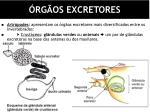 rg os excretores3