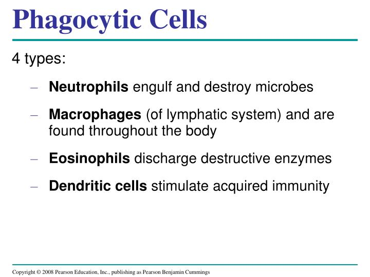 Phagocytic Cells