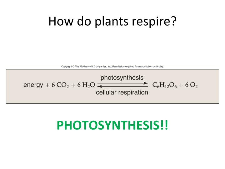 How do plants respire?