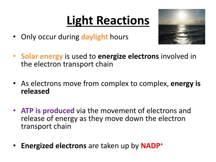 Light Reactions