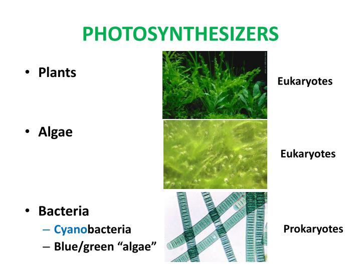 PHOTOSYNTHESIZERS