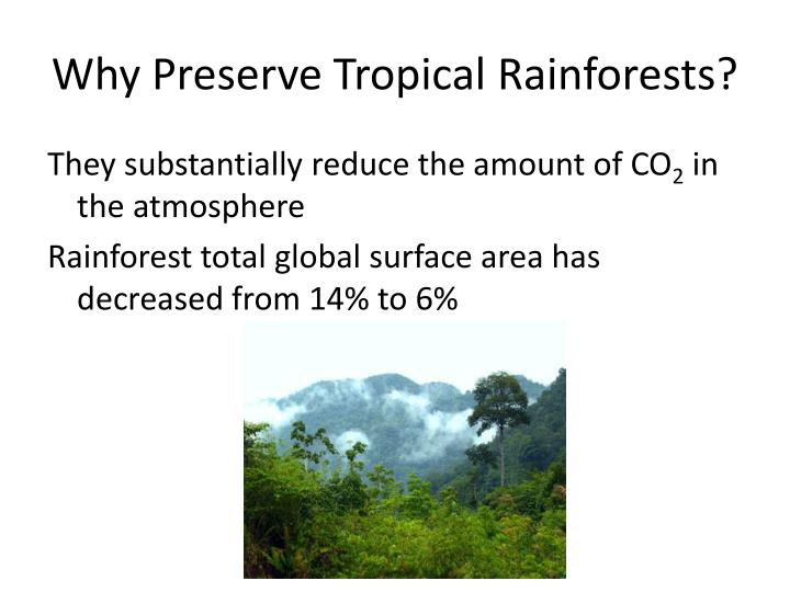 Why Preserve Tropical Rainforests?