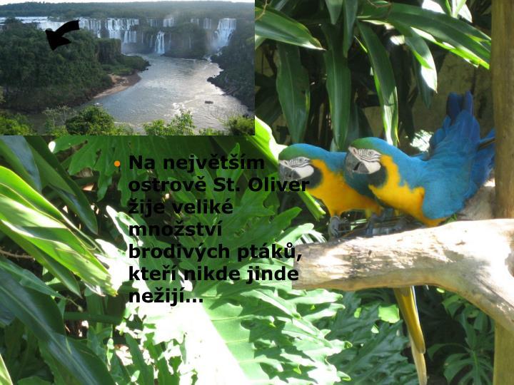 Na největším ostrově St. Oliver žije veliké množství brodivých ptáků, kteří nikde jinde nežijí…