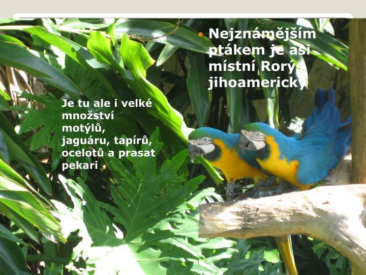 Nejznámějším ptákem je asi místní Rorýs      jihoamerický