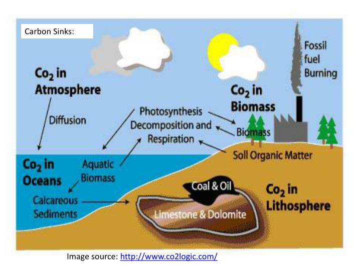 Carbon Sinks: