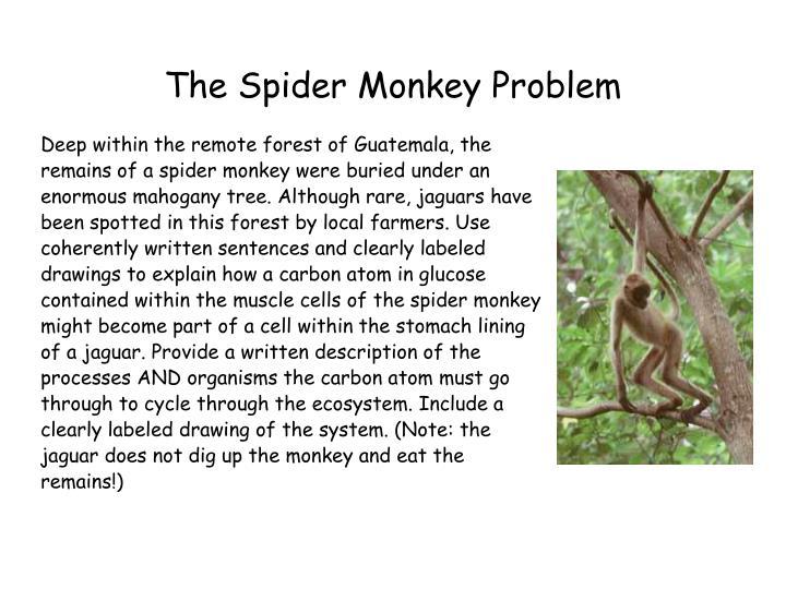 The Spider Monkey Problem