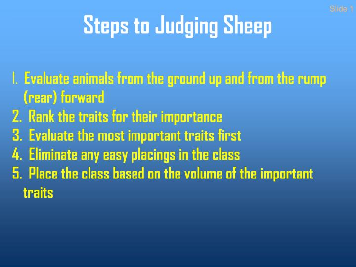 Steps to judging sheep