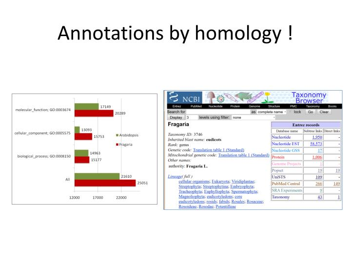 Annotations by homology !