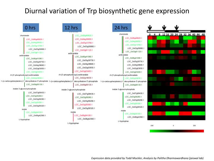 Diurnal variation of Trp biosynthetic gene expression