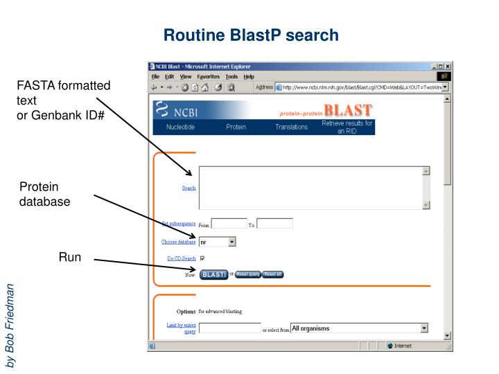 Routine BlastP search