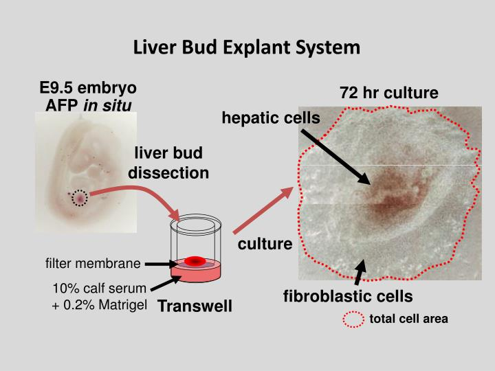 Liver Bud Explant System