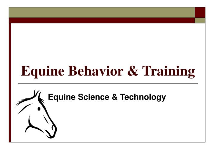 Equine behavior training