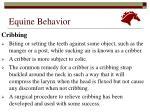 equine behavior17