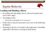 equine behavior22