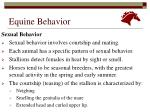equine behavior6
