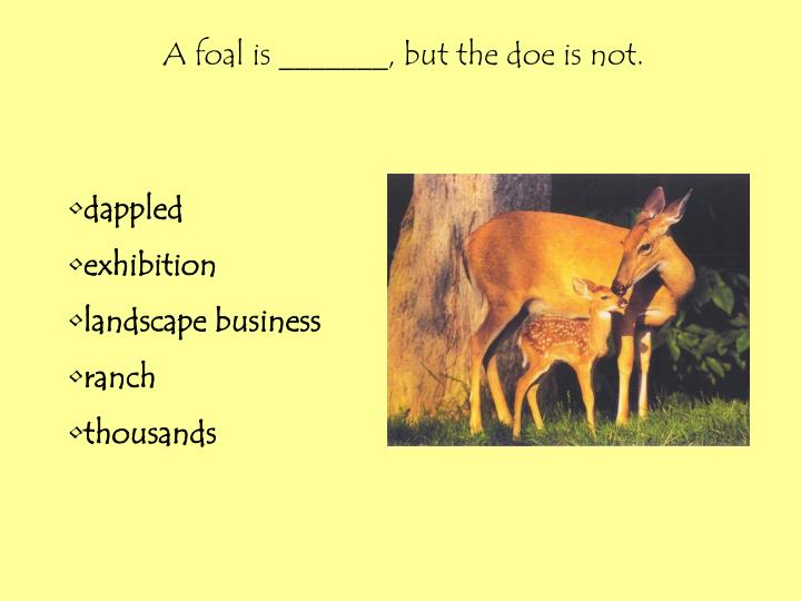 A foal is _______, but the doe is not.
