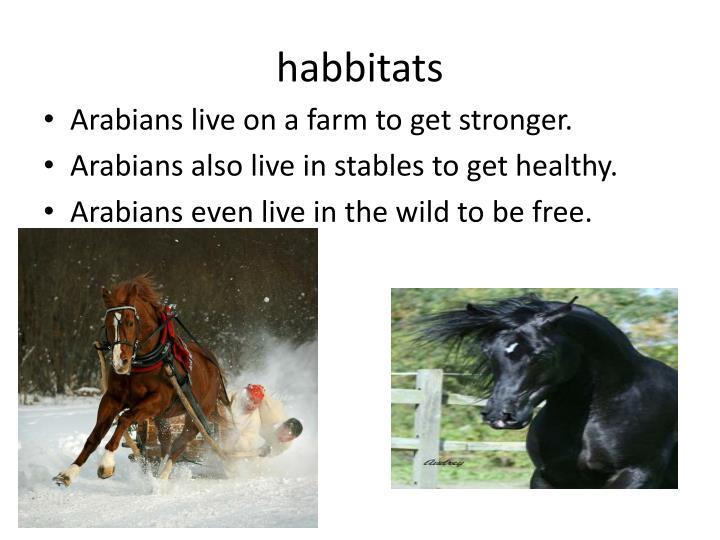 habbitats