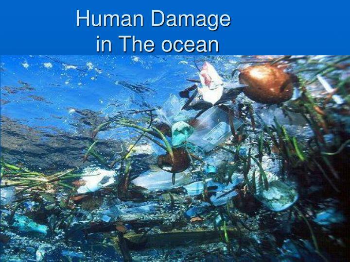 Human Damage in The ocean