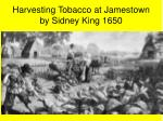 harvesting tobacco at jamestown by sidney king 1650