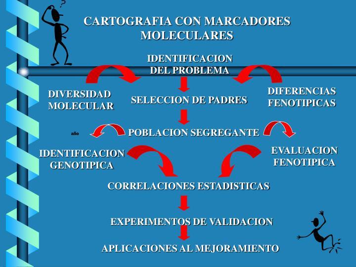 CARTOGRAFIA CON MARCADORES MOLECULARES