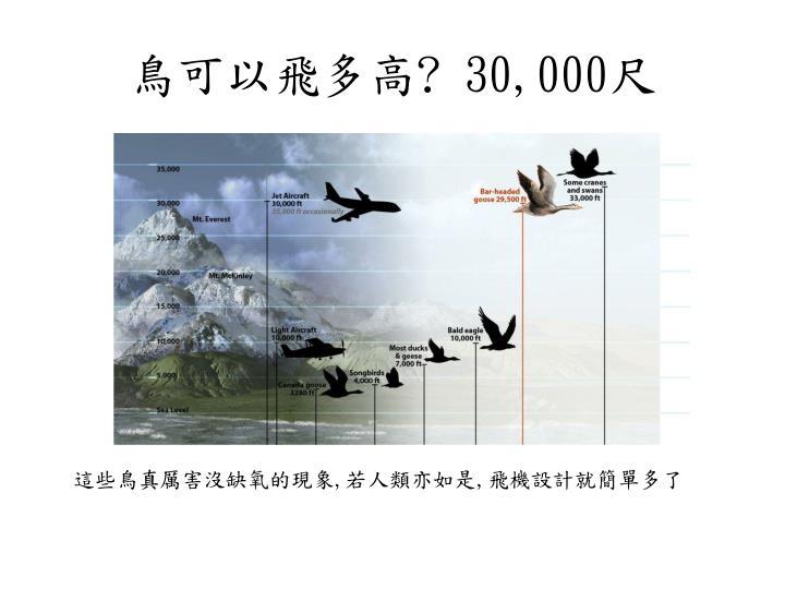鳥可以飛多高