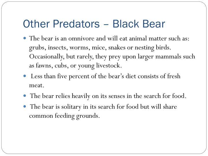 Other Predators – Black Bear
