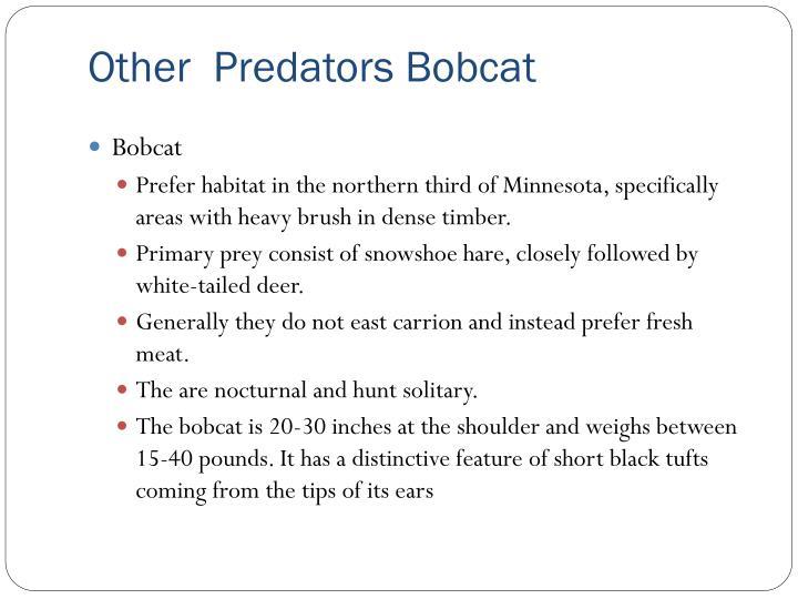 Other  Predators Bobcat