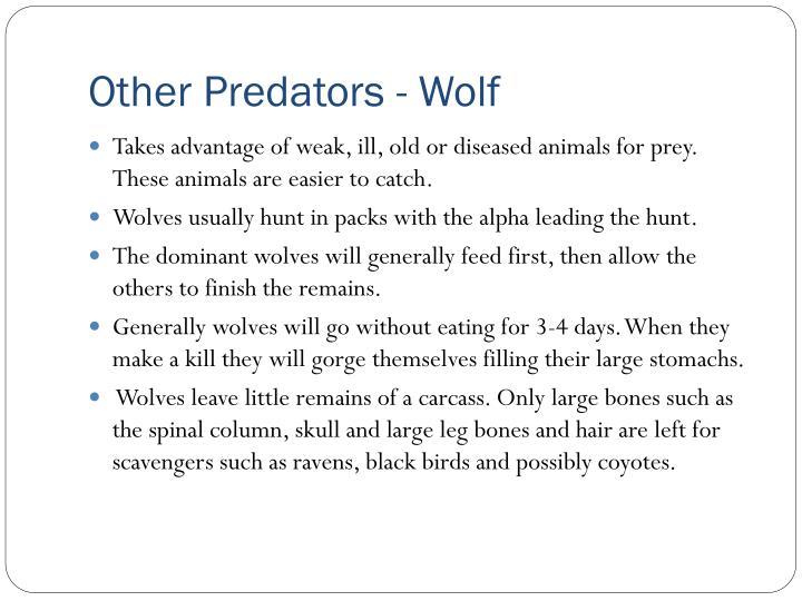 Other Predators - Wolf