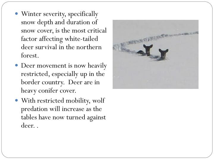 Winter severity, specifically snow depth and duration of snow cover, is the most critical factor affecting white-tailed deer survival in the northern forest.