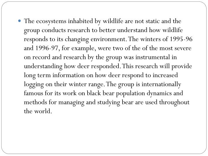 The ecosystems inhabited by wildlife are not static and the group conducts research to better understand how wildlife responds to its changing environment. The winters of 1995-96 and 1996-97, for example, were two of the of the most severe on record and research by the group was instrumental in understanding how deer responded. This research will provide long term information on how deer respond to increased logging on their winter range. The group is internationally famous for its work on black bear population dynamics and methods for managing and studying bear are used throughout the world.