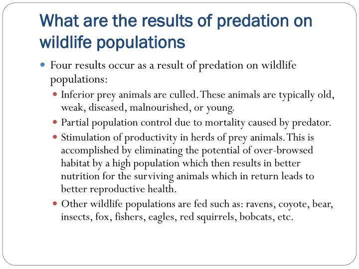 What are the results of predation on wildlife populations