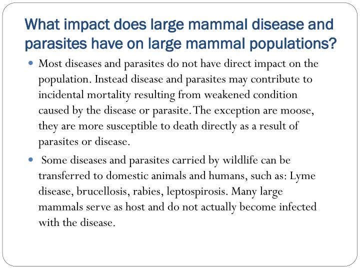 What impact does large mammal disease and parasites have on large mammal populations?