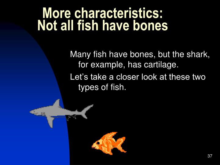 Goldfish caught in the loop for Characteristics of fish