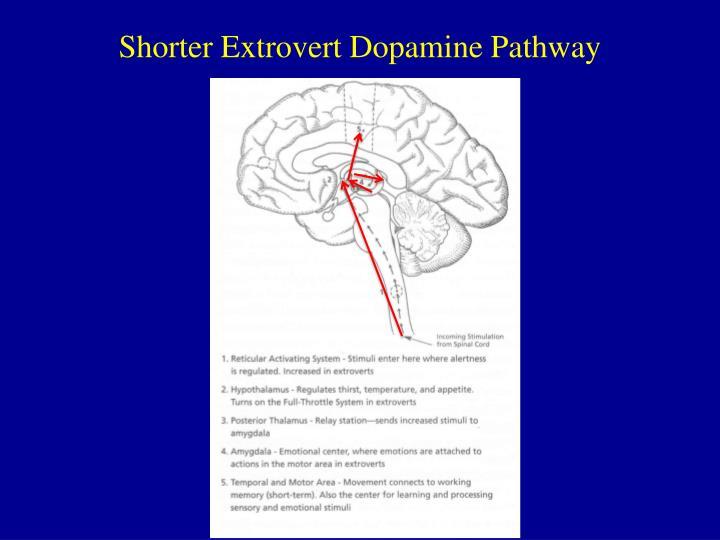 Shorter Extrovert Dopamine Pathway
