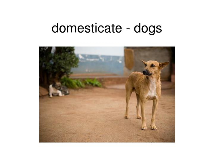 domesticate - dogs