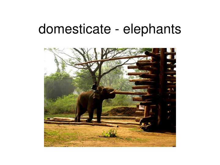 domesticate - elephants