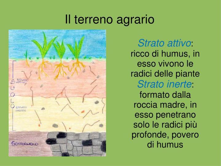 Il terreno agrario