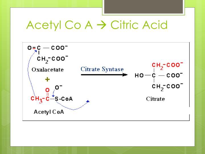 Acetyl Co A