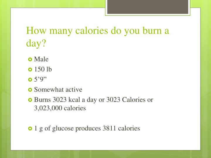 How many calories do you burn a day?