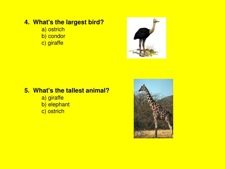 4.  What's the largest bird?