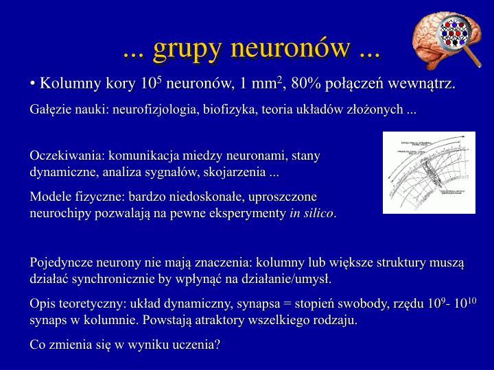 ... grupy neuronów ...