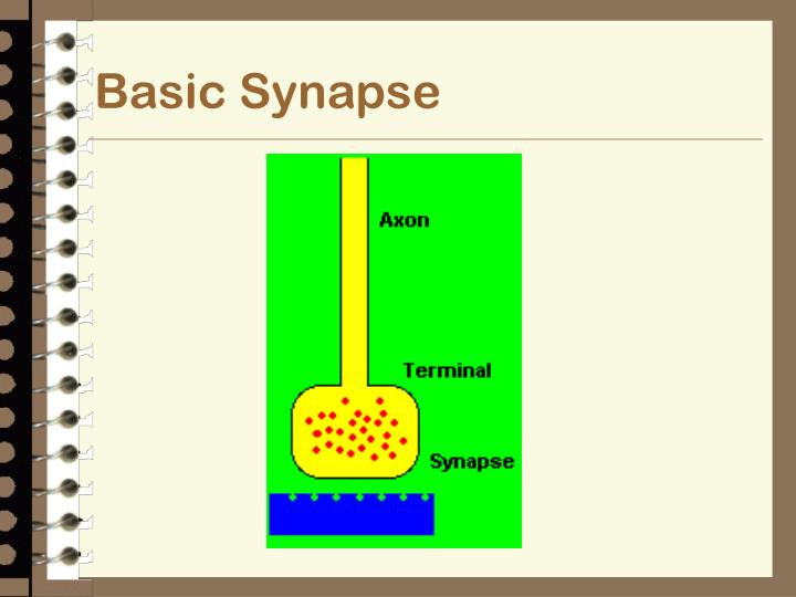 Basic Synapse