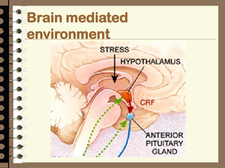 Brain mediated environment