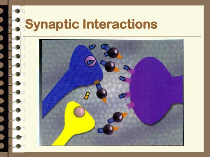 Synaptic Interactions