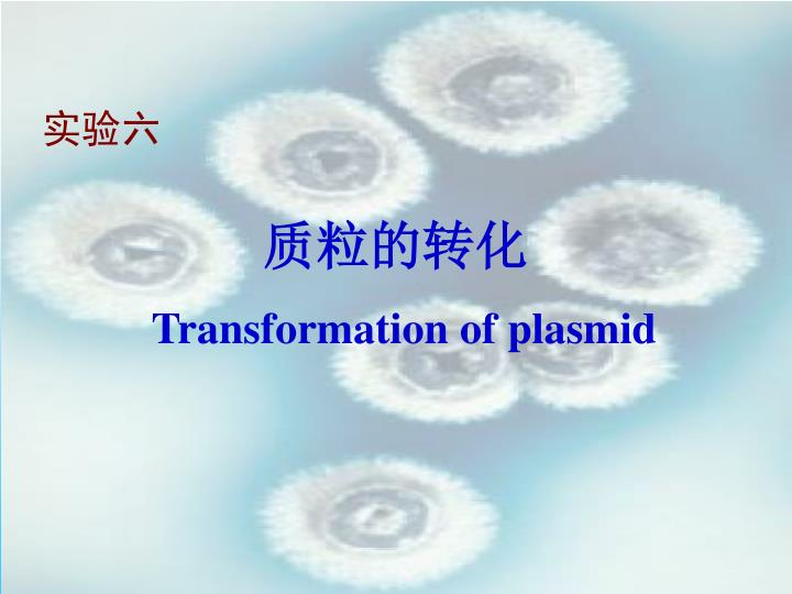Transformation of plasmid