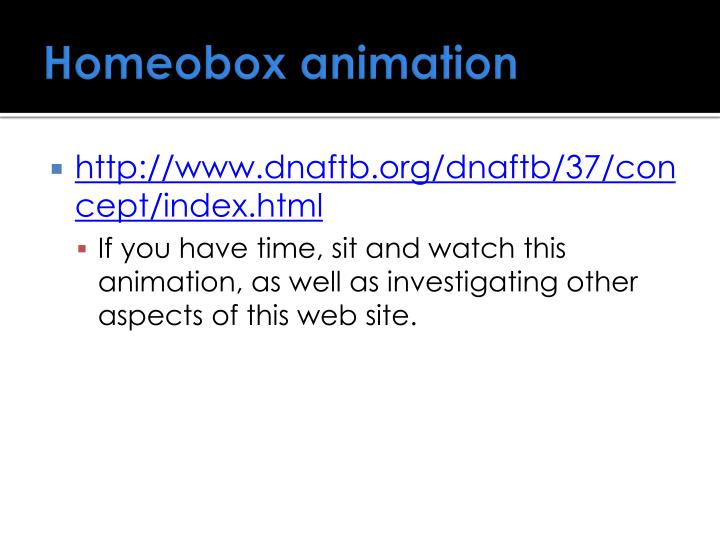 Homeobox animation
