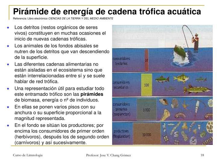 Pirámide de energía de cadena trófica acuática