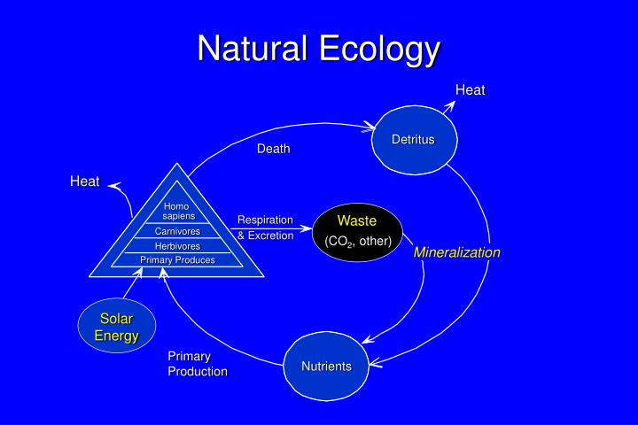Natural Ecology