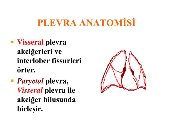 PLEVRA ANATOMİSİ